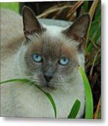 Blue Eyes In The Garden Metal Print