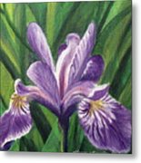 Blue Flag Iris Metal Print