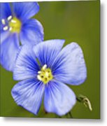 Blue Flax #2 Metal Print