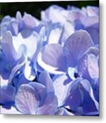 Blue Floral Art Prints Blue Hydrangea Flower Baslee Troutman Metal Print