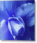 Blue Floral Begonia Metal Print