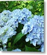 Blue Floral Hydrangea Flower Summer Garden Basle Troutman Metal Print