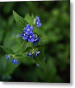 Blue Flower In Spring Metal Print