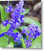 Blue Flowers B4 Metal Print