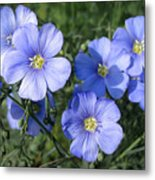 Blue Flowers In The Sun Metal Print