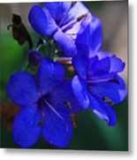 Blue For The Sun Metal Print