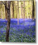 Blue Forest In Shadow Metal Print