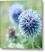 Blue Globe Thistle Flower Metal Print