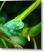 Blue-green Tropical Frog Metal Print