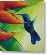 Blue-headed Hummingbird Metal Print