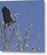 Blue Heron 35 Metal Print