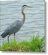 Blue Heron By The Lake Metal Print