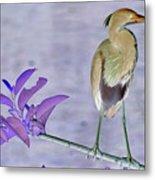 Blue Heron Colorized Metal Print