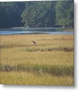 Blue Heron ...in Flight Metal Print