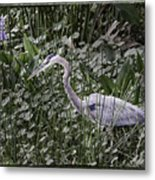 Blue Heron In Grass 4566 Metal Print