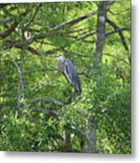 Blue Heron In Green Tree Metal Print
