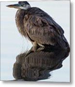 Blue Heron In Reflection, St. Marks Wildlife Refuge, Florida Metal Print