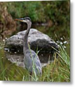 Blue Heron In River Metal Print