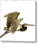 Blue Heron In Sepia Metal Print
