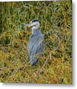 Blue Heron In The Autumn Colours Metal Print