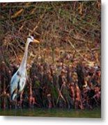 Blue Heron In The Cypress Knees Metal Print