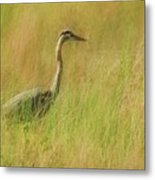 Blue Heron In The Grass. Metal Print