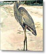 Blue Heron On Shell Beach Metal Print