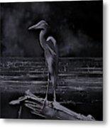 Blue Heron Pose Metal Print