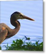 Blue Heron-the Profile Metal Print