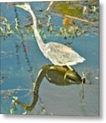 Blue Heron Walking Metal Print