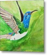 Blue Humming Bird Metal Print