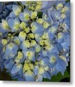 Blue Hydrangea Bouquet Metal Print