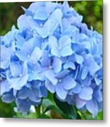 Blue Hydrangea Floral Art Print Hydrangeas Flowers Baslee Troutman Metal Print