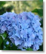 Blue Hydrangea Flower Art Prints Baslee Troutman Metal Print