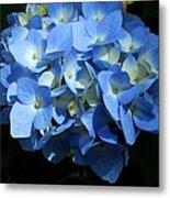 Blue Hydrangea II Metal Print