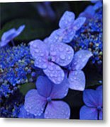 Blue Hydrangea Metal Print by Noah Cole