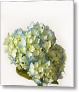 Blue Hydrangea Spray Metal Print