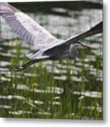 Blue In Low Glide Metal Print