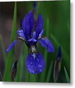 Blue Iris Petal Metal Print