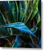 Blue Jay Agave Metal Print