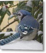 Blue Jay Beauty Metal Print