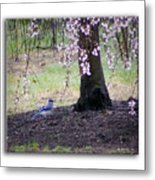 Blue Jay Metal Print