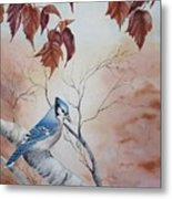 Blue Jay - Geai Bleu Metal Print