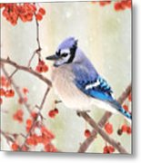 Blue Jay In Snowfall Metal Print