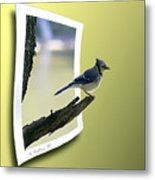 Blue Jay Perched Metal Print
