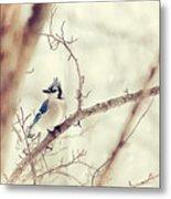 Blue Jay Winter Metal Print