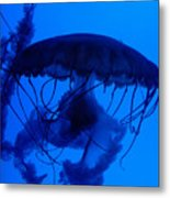 Blue Jelly Fish Metal Print