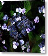 Blue Lace Metal Print