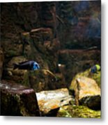 Blue Little Fish In Aquarium Metal Print