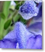 Blue Lupine Flower 1 Of 5 Shots Metal Print